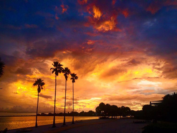 12 Reasons To Love Eckerd College #eckerdcollege #saintpete #florida