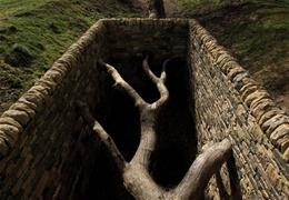Hanging Trees (2007) by Andy Goldsworthy