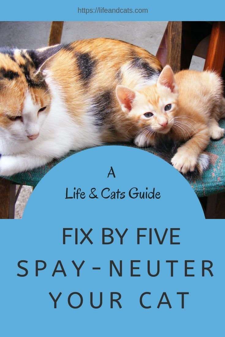 Fix Your Cat Before They Hit Puberty For Better Health Outcomes Population Control And Making The Cat A Better Pet Spa Cat Health Problems Cat Behavior Cats