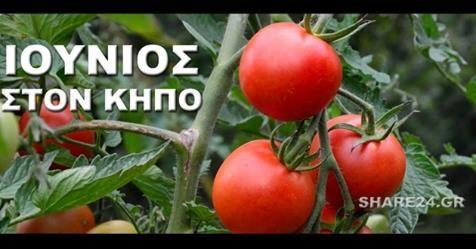 Μωσαϊκό: Καλλιεργητικές εργασίες του Ιουνίου