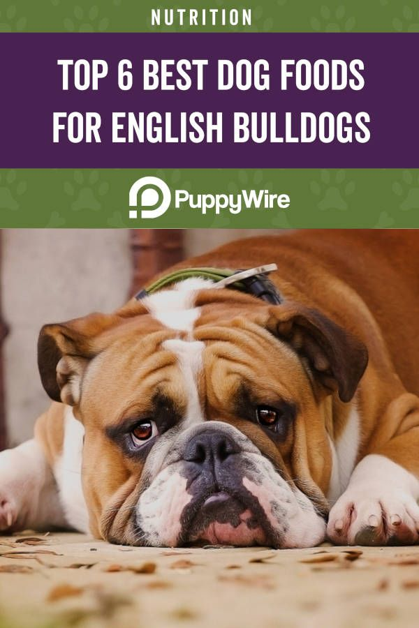 Best Dog Food For English Bulldogs Buying Guide Reviews Dog Food Recipes Best Dog Food Natural Dog Food