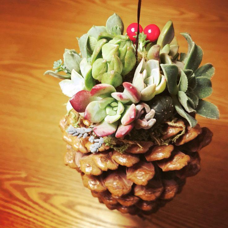 Succulent Pine cone planter