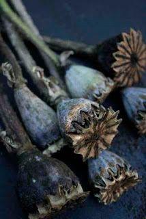 ♔ Autumn in Blue
