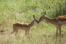 Wildlifeand idleness Type: Short safari with accommodation in lodges with possible extension to Zanzibar Duration: 5 Days/4 Nights Condition: This program is designed to discover the wildlife in …