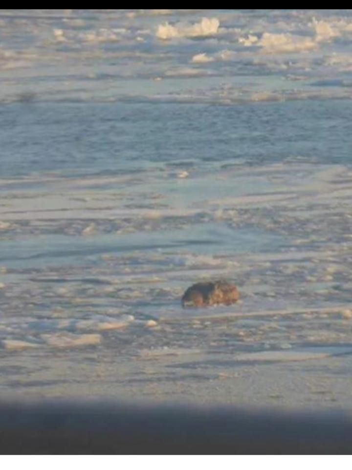 Who has the responsibility to save a dog on the St. Lawrence?
