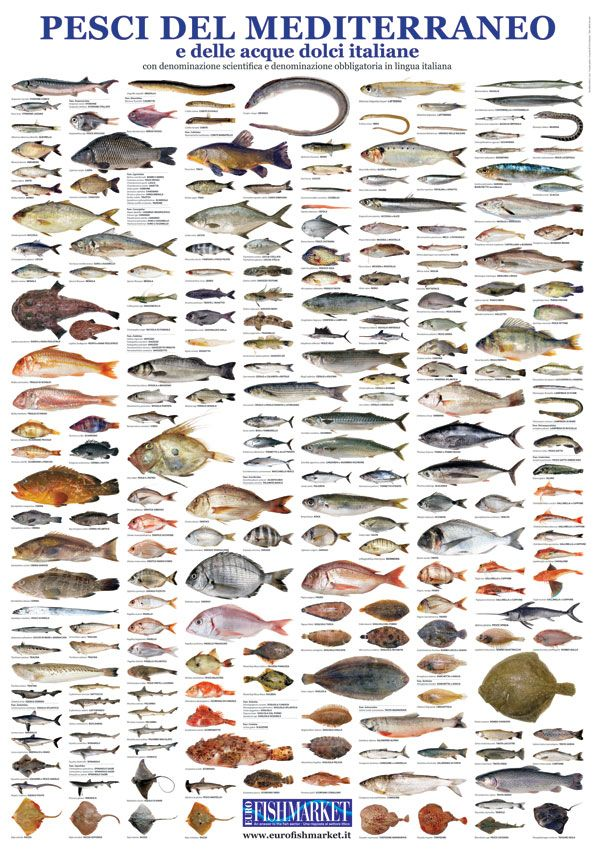 19 best images about pesci del mediterraneo on pinterest fish chart and birds - Pesci piu comuni a tavola ...