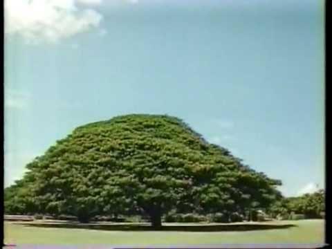 HITACHI この木なんの木 1991 好きだったこれ