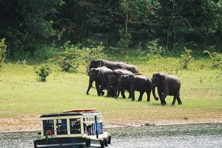 Thekkady boat safari Idukky Kerala