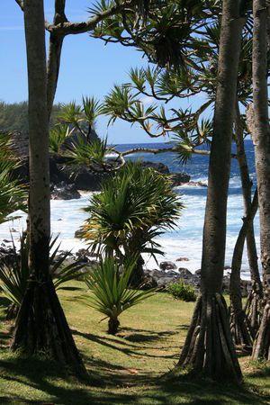 La Reunion//La forêt de Mare Longue est une forêt des Hauts du sud-est de l'île de La Réunion, département d'outre-mer français dans l'océan Indien. Wikipédia