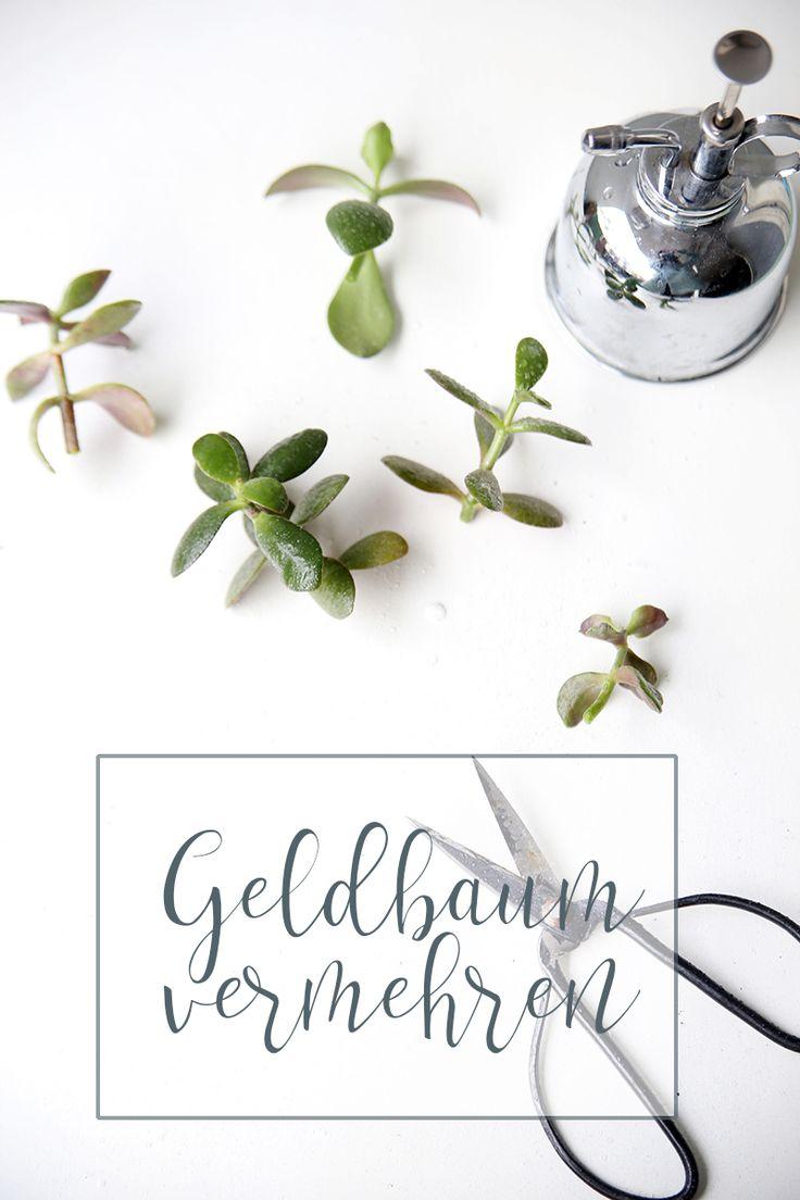 196 besten plants and flowers blogstlove bilder auf pinterest rheinhessen diy upcycling und. Black Bedroom Furniture Sets. Home Design Ideas