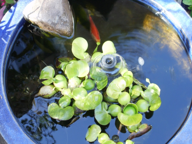 Easy to make pond in a pot.  Goldfish love it.
