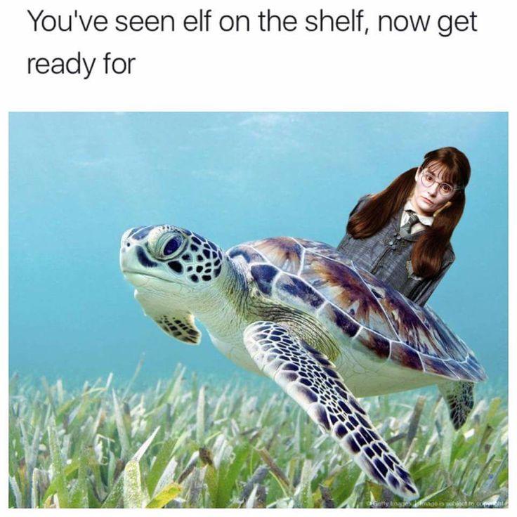 Myrtle on the turtle