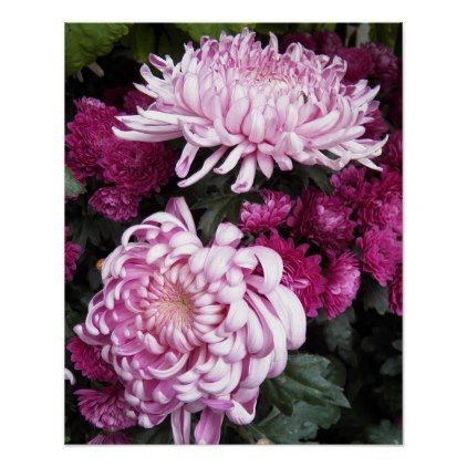 Pink Chrysanthemums Floral Poster -nature diy customize sprecial design