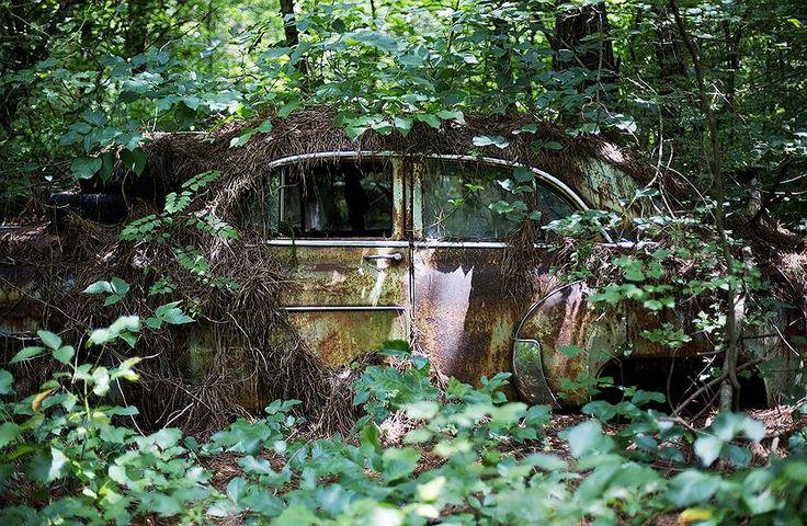Со временем семейный бизнес перерос в нечто большее: Льюис решил спасать старые автомобили от исчезновения и начал их скупать. Автопарк рос с каждым годом и к 70-м составлял уже около 40 авто
