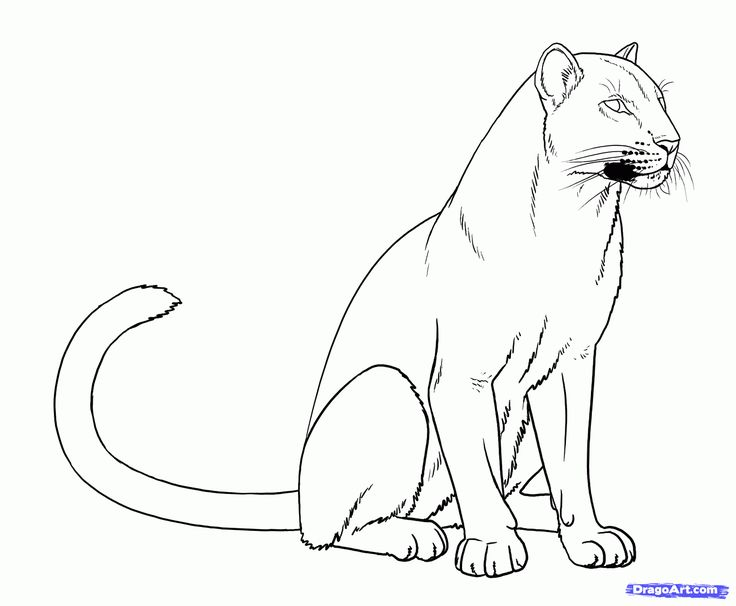 panther drawings | Draw Panthers, Black Panthers, Step by Step, Drawing Sheets, Added by ...
