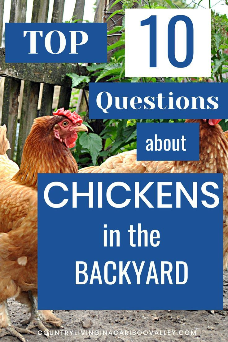 ce7dcd5c2ec62107557b84f42b565cd3 - Gardening With Free Range Chickens For Dummies
