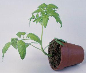 Scientific method plants growing towards lights