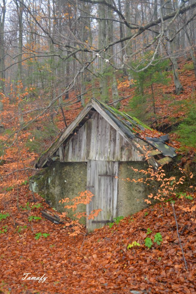 ... lesná architektúra minulého tisícročia (forest architecture of last century)