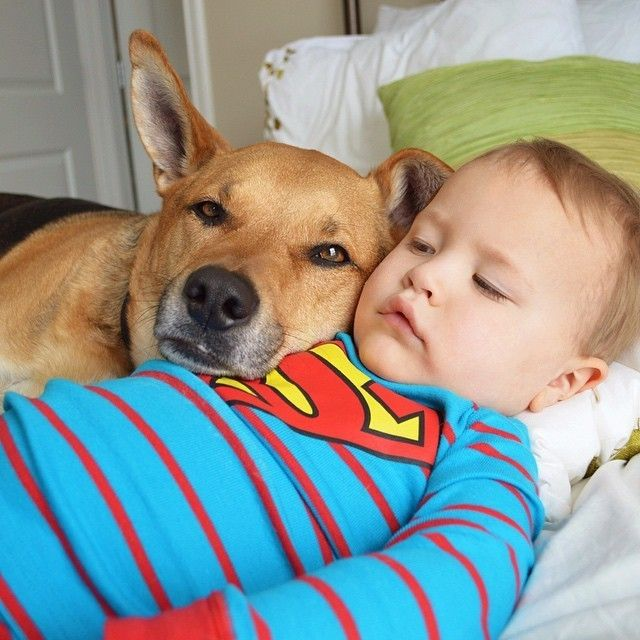 Best Cute X Babies Animals Images On Pinterest Animal - Theo beau cutest animal human pairing ever