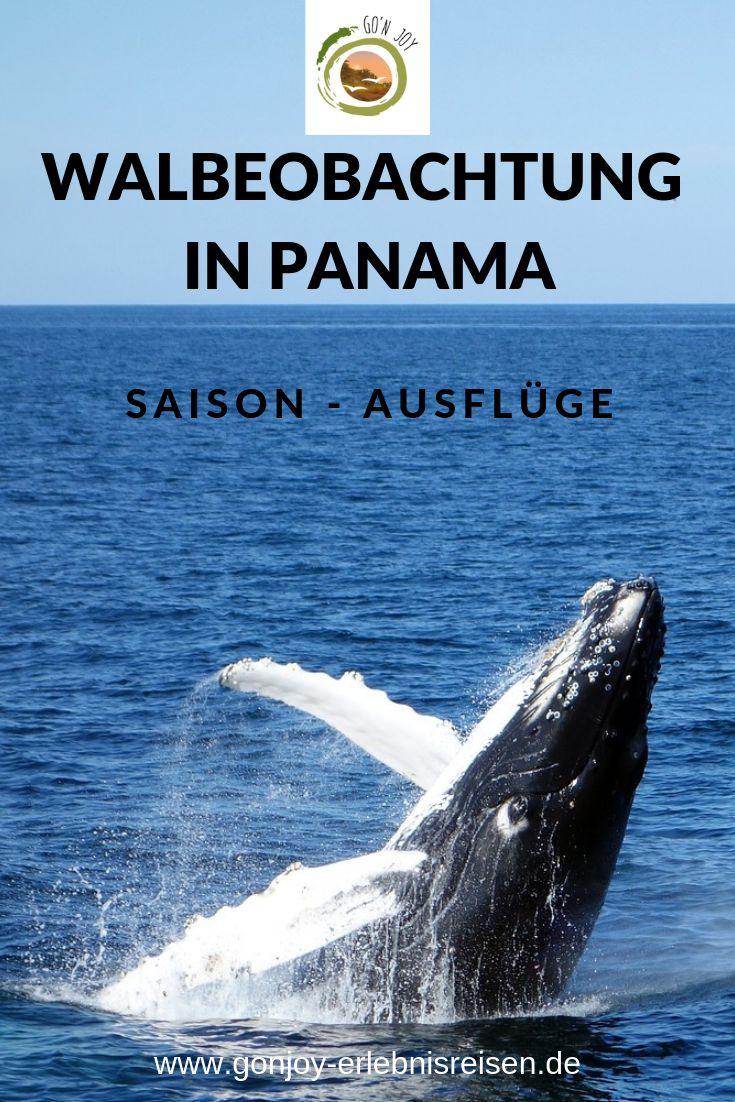 Tagesausflüge ab Panama Stadt in 2019 | Reiseziele ...