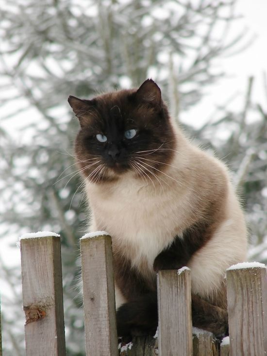 cat kidney failure stages