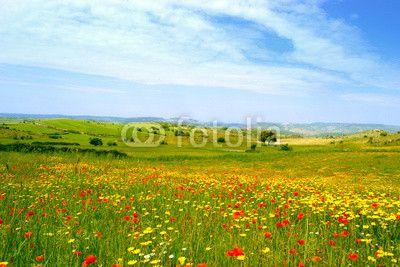 Panorama con prato fiorito - papaveri e margherite gialle #microstock #marketing #webdesign #design #WebContent #SEO #csstemplates #css #HTML5 #Websites #web20k #web2014 #web