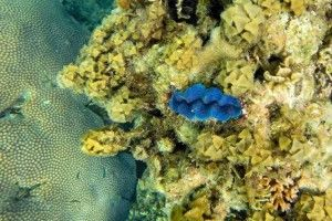 CORAL IN KOH TAO (THE TURTLE ISLAND)