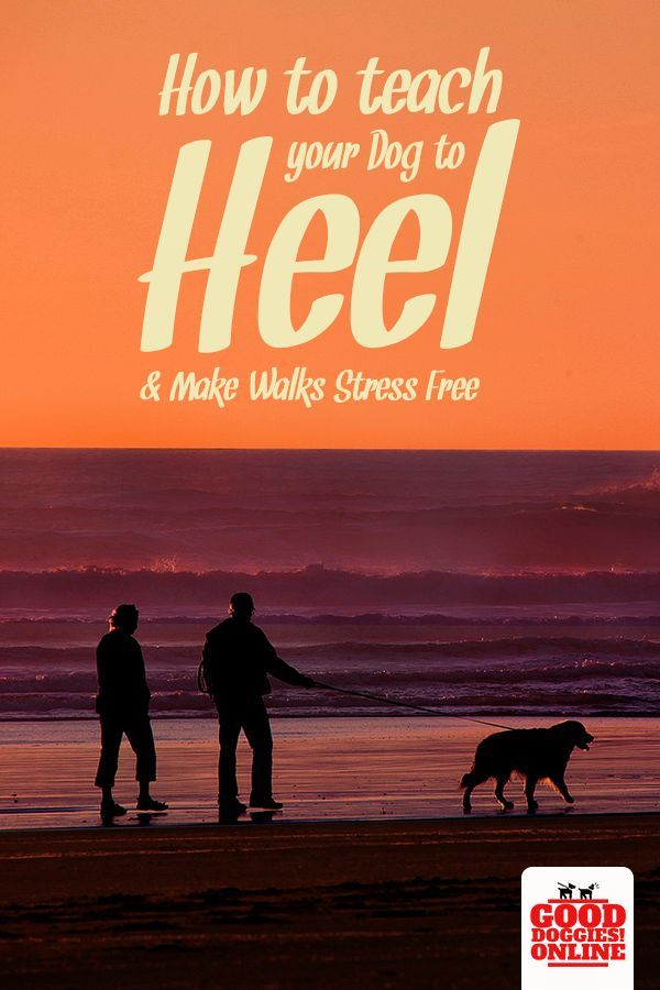How Teaching A Dog To Heel Will Make Walks Stress Free Best Dog