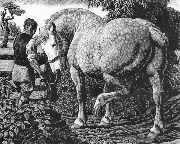The Percheron, 1940, for the Royal Academy, Charles Tunnicliffe, wood engraving
