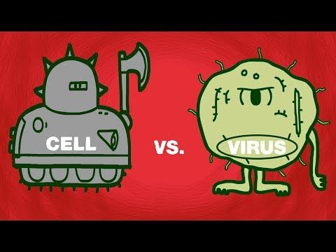 Great quick animated lesson on how viruses attack and how our bodies retaliate