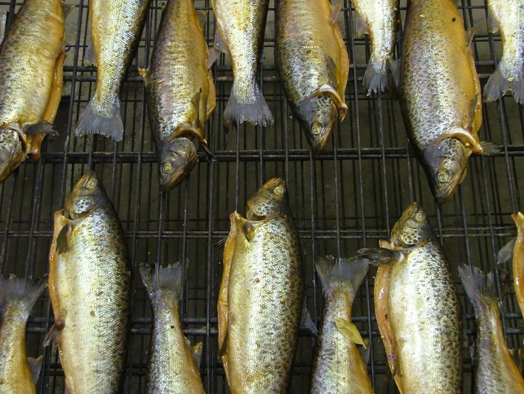 41 Degree Salmon
