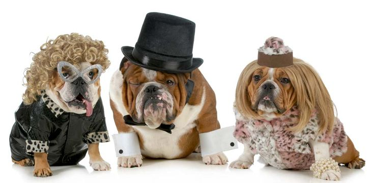 Halloween is just around the corner and people are preparing their spookiest and craziest costumes for both themselves and their pets. However, you don't need to just dress your dog up on Halloween for fun – you can dress them up anytime for any occasion. Dogs look hilariously cute in some of these best dog costumes any day of the year. #dogcostumes #dogs #costumes #pets