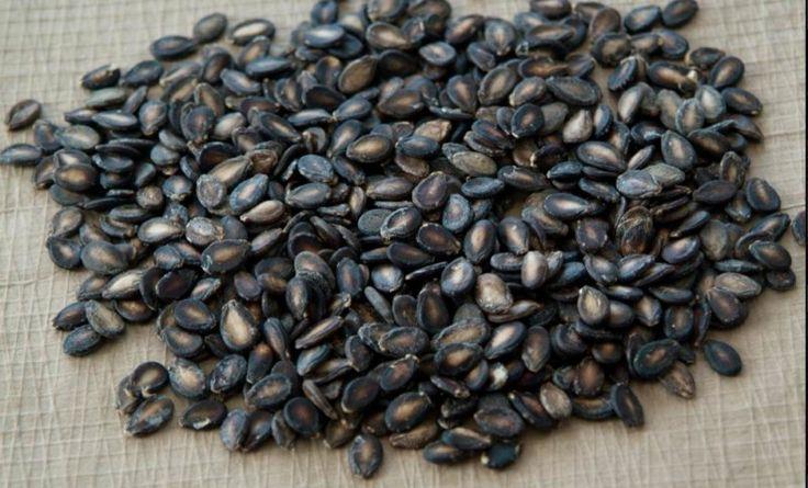 Questi semi sono i migliori.