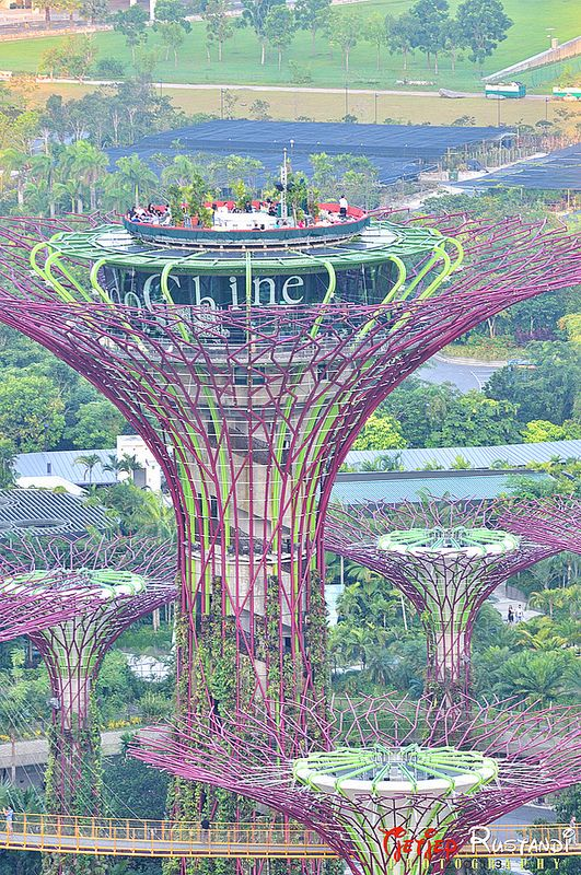 The top of Supertree Grove at Gardens by the Bay in 2020
