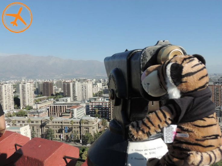 Even Truman the Tiger enjoys looking at the city of Santiago! For info on our programs head to TCoBStudyAbroad.Missouri.Edu