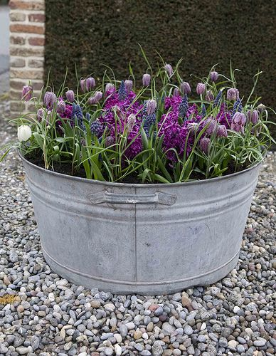 Colorful Perennials – Flowers for Spring Containers | | Blissfully DomesticBlissfully Domestic
