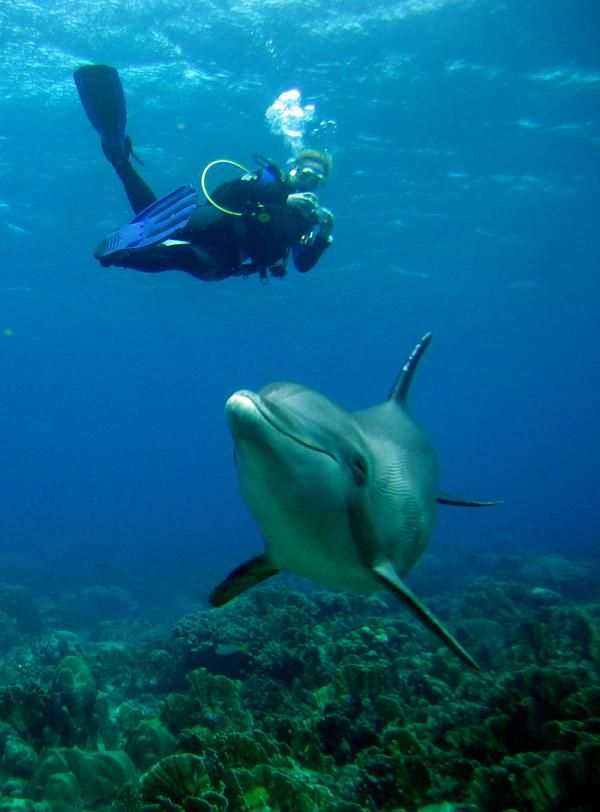 I want to dive with dolphins