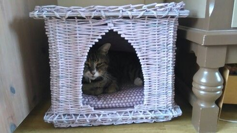 Kittybed
