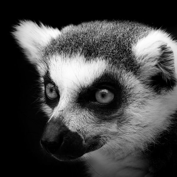 Intimate Black and White Portraits of Exotic Animals in Captivity