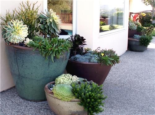 The textures and patterns of succulents make a fantastic low-maintenance container planting. Let Margie Grace, California landscape designer show you her tips for designing with planters: http://www.landscapingnetwork.com/landscaping-ideas/container-gardens.html Design by Grace Design Associates - Santa Barbara, CA.