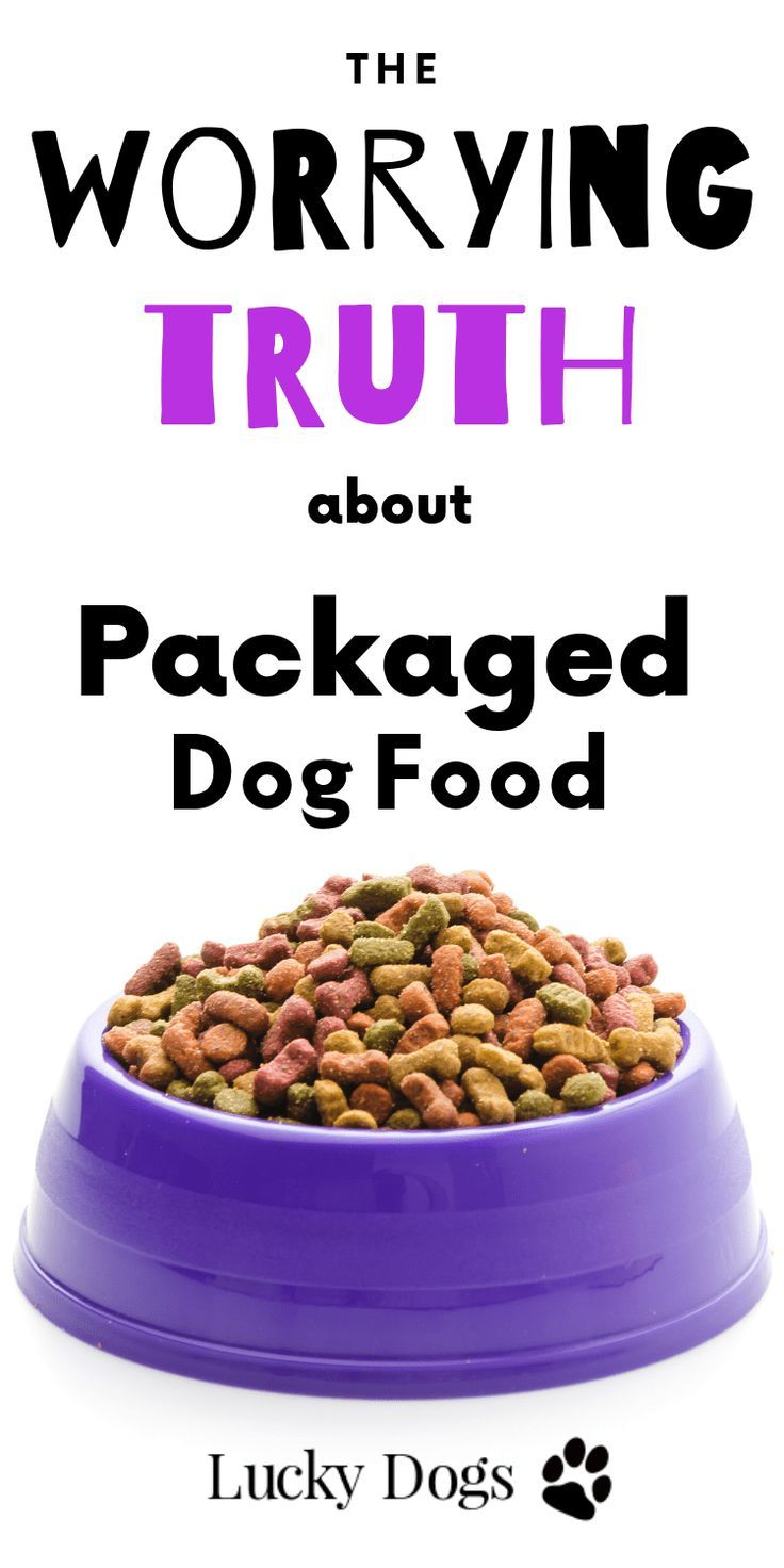 The Worrying Truth About Dog Food Dog food recipes, Dog