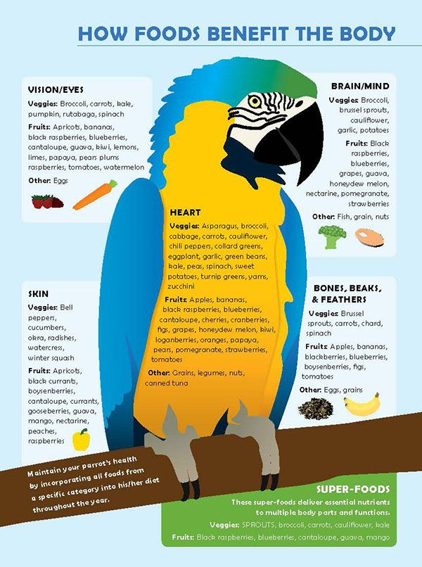 Infographic about a healthy parrot diet.