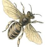 *The Graphics Fairy LLC*: Vintage Stock Image - Honey Bee