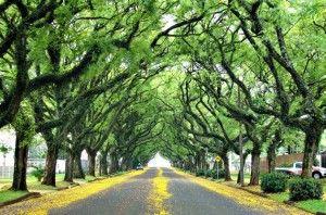 Rua Gonçalo de Carvalho, Porto Alegre, Brazil. Considered the most beautiful street in the world!