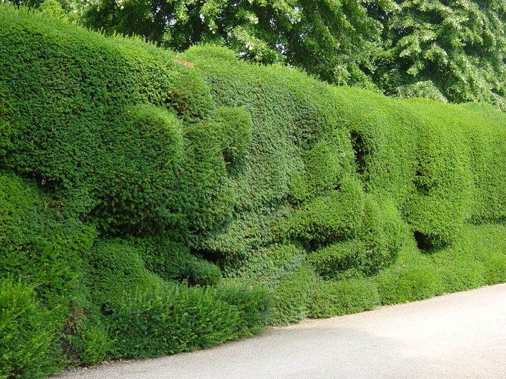 42 best garten hecken und sichtschutzstr ucher images on pinterest hedges backyard ideas. Black Bedroom Furniture Sets. Home Design Ideas