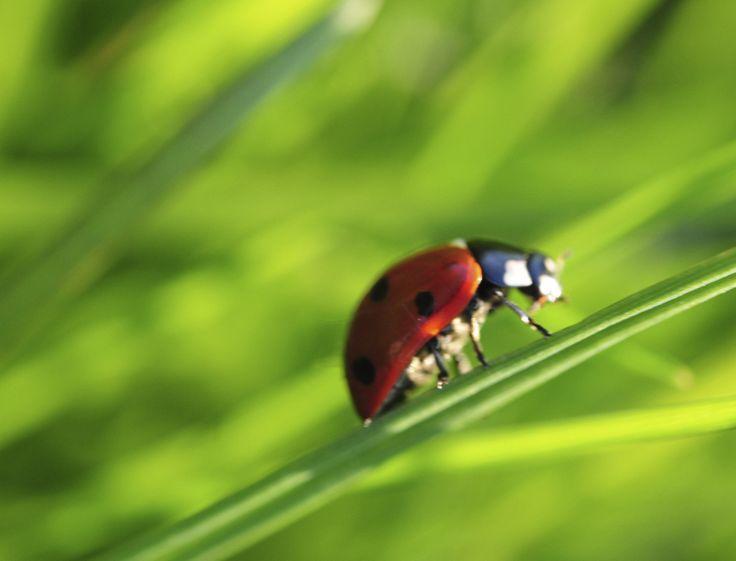 Les 52 meilleures images du tableau potager sur pinterest for Jardin synonyme