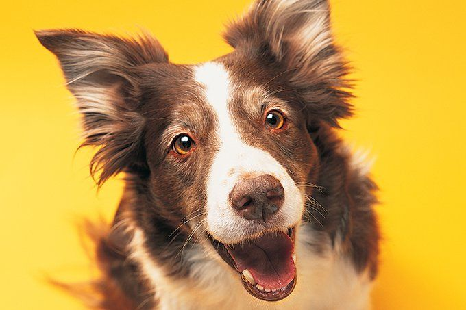 Hiperatividade também afeta os cães – veja 7 sintomas típicos