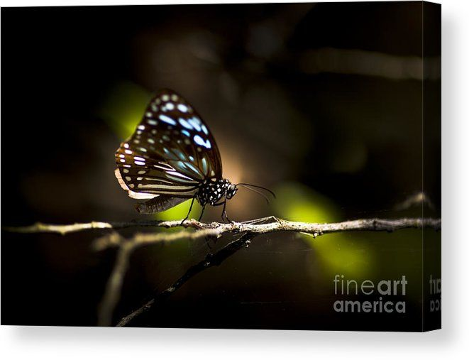 Insect Canvas Print featuring the photograph Colorful Butterfly On Twig by Jorgo Photography - Wall Art Gallery