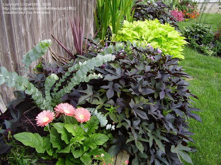93 best cool landscaping ideas images on pinterest for Ornamental pond plants