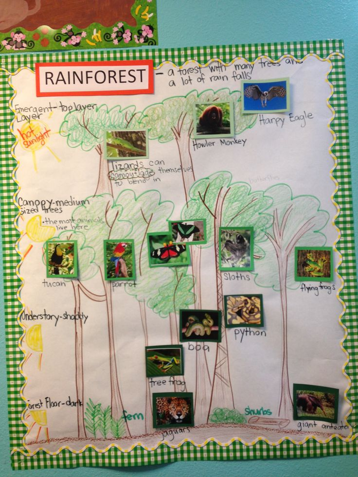 """Rainforest habitat pictorial (diagram) input. This concept by G.L.A.D introduces tough vocabulary for kids paired with visual representation. No need to """"dumb"""" down curriculum."""